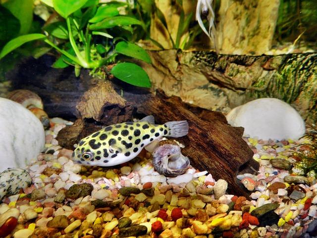 Aquarium, Puffer Fish, Toxic, Fish, Animal, Water