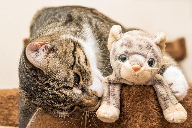 Cat, Toys, Plush Cat, European Shorthair, Race
