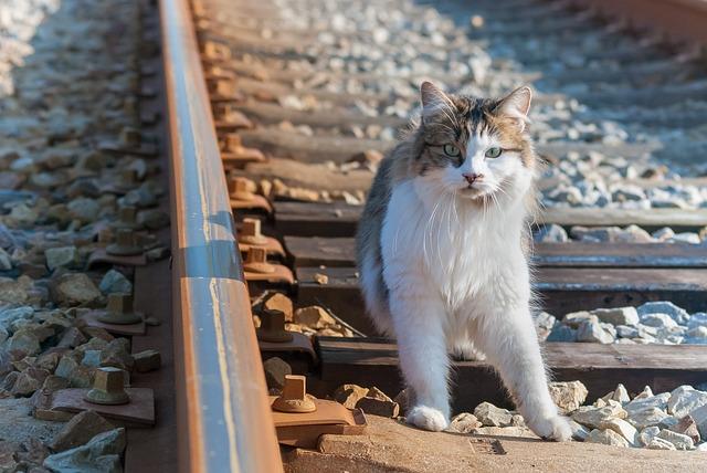 Cat, Rail, Railway, The Rail, Steel, Track