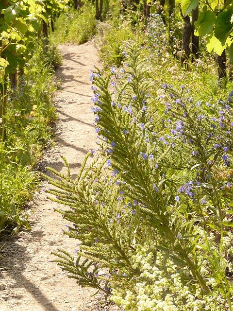 Away, Trail, Path, Vineyard, Vineyard Way