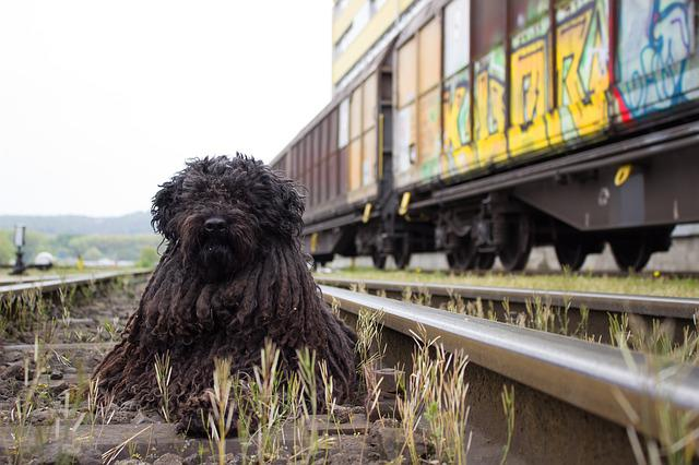 Dog, Railway, Train, Railway Station, Track, Seemed