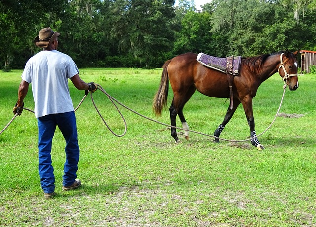 Horse, Training, Trainer, Thoroughbred, Outdoors, Farm