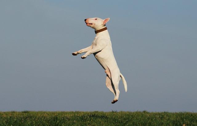 Dog, Training, Joy, Fun, Dog School