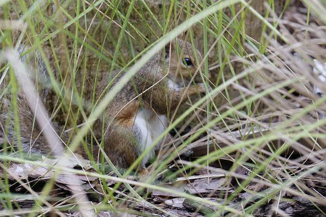 Squirrel, Hidden, Herbs, Cache, Calm, Tranquility