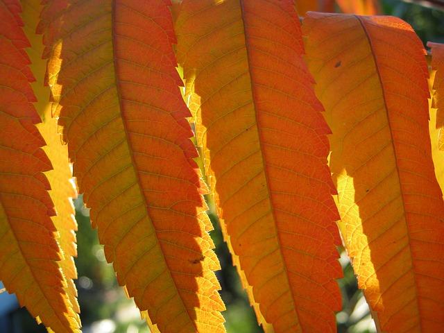 Leaves, Autumn, Emerge, Orange, Bright, Translucent