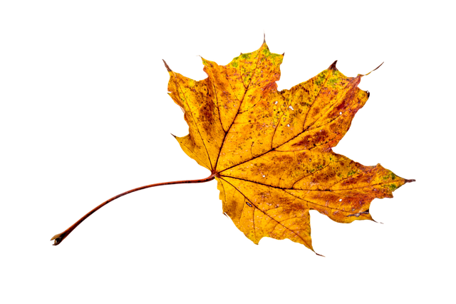 Autumn, Leaves, Leaf, Png, Transparent, Fall Color