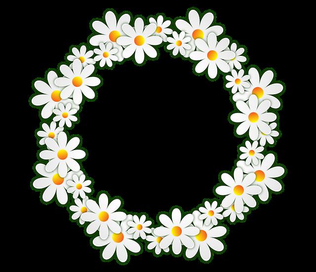 Flowers, Daisy, Photo Frame, Transparent Background