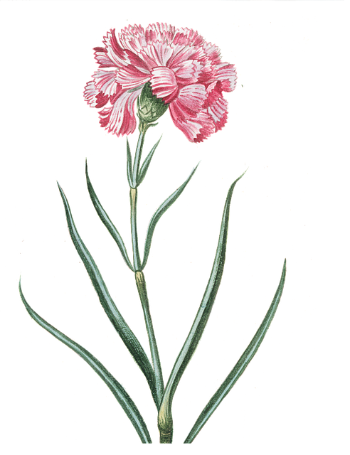 Flower, Pink, Transparent, Vintage, Pink Flowers