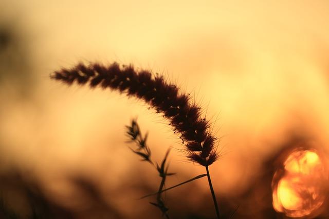 Sunset, Evening, Sky, Landscape, Nature, Travel, Yellow