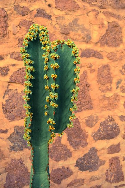 Cactus, Mexico, Brickwall, Green, Travel, Nature, Plant