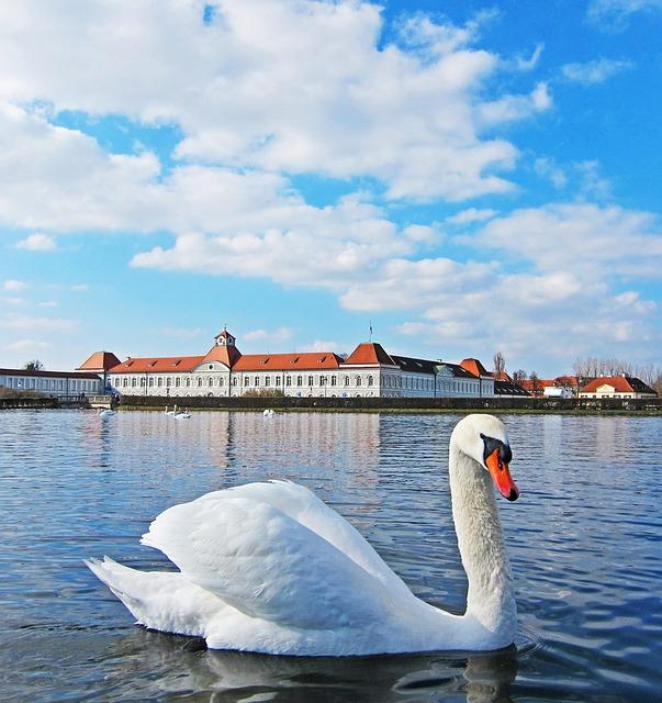 Swan, Germany, Lake, Castle, Travel, Europe, Water