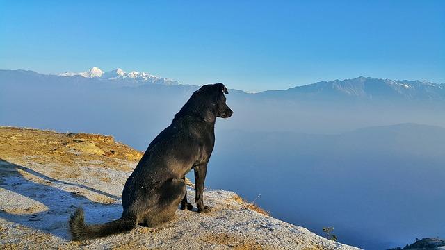 Landscape, Dog, Outdoor, Pet, Travel, Sky, Canine