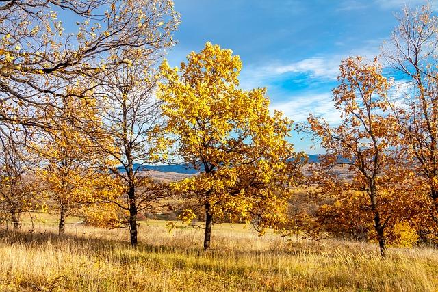 Nature, Trees, Landscape, Travel, Tourism, Mountain