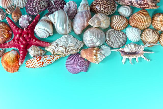 Mussels, Marine Gastropods, Starfish, Travel