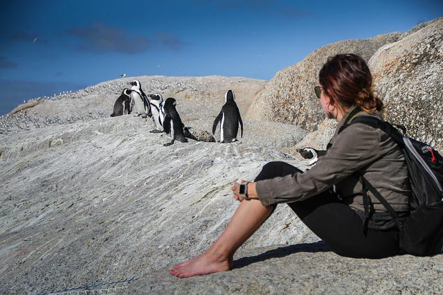 Penguins, South Africa, Cape Town, Travel Nature