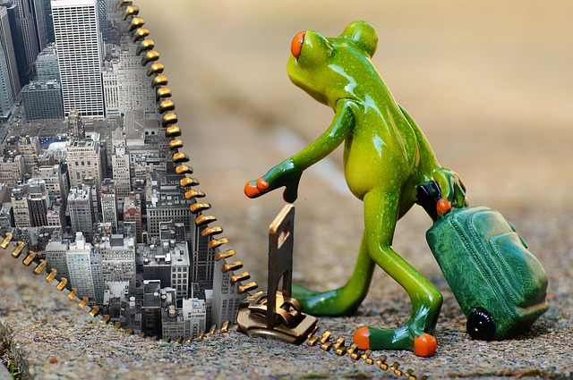 Time For A Change, Frog, Farewell, Travel, Luggage