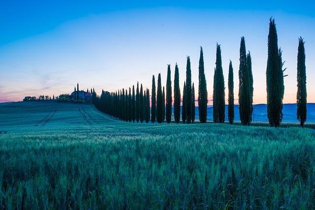 Landscape, Nature, Sky, Travel, Tree
