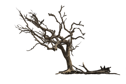 Tree, Aesthetic, Nature, Isolated, Gnarled, Branches