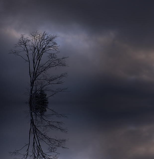 Tree, Crown, Aesthetic, Tree Top, Winter, Kahl, Clouds