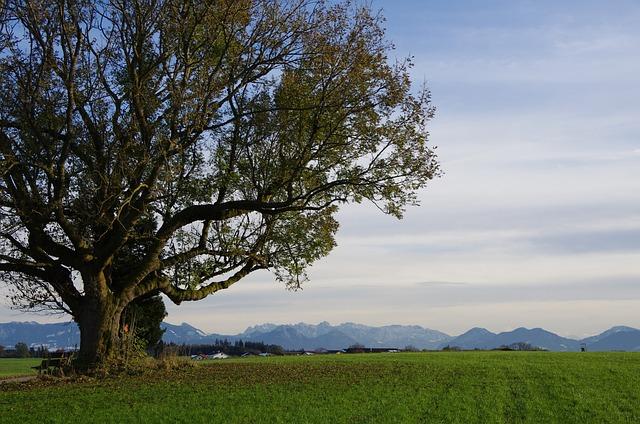 Nature, Tree, Alpine Foothills, Panoramic Views