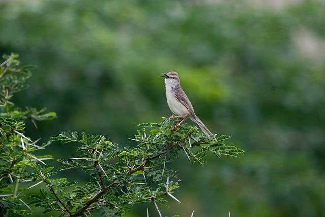 Nature, Wildlife, Outdoors, Bird, Tree, Animal