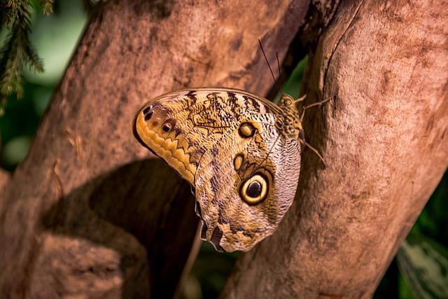 Nature, Wildlife, Animal, Wood, Tree, Outdoors
