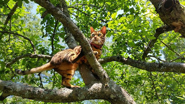 Tree, Cat, Animals, Climbs