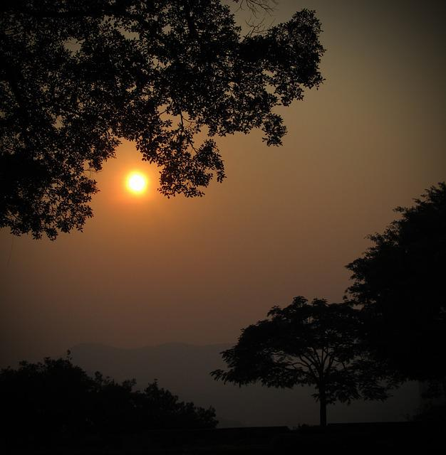 Sunset, China, Asia, Macau, Tree