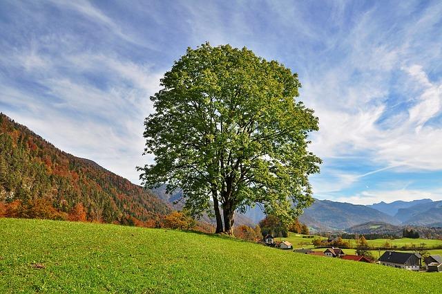 Tree, Sky, Nature, Landscape, Autumn, Autumn Landscape