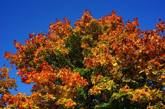 Tree, Late Summer, Autumn, Leaves, Nature, Landscape