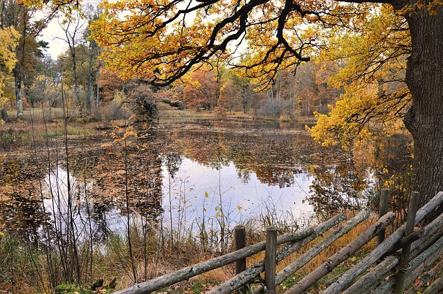 Fence, Outdoor, Autumn, Sweden, Nature, Forest, Tree