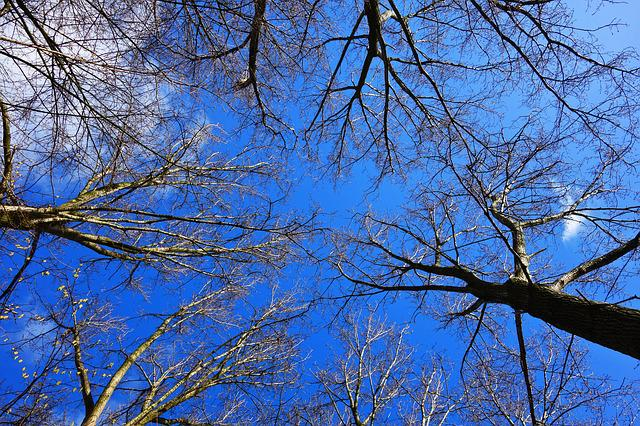 Tree, Tree Top, Trunk, Branch, Bare Branch, Bare Tree