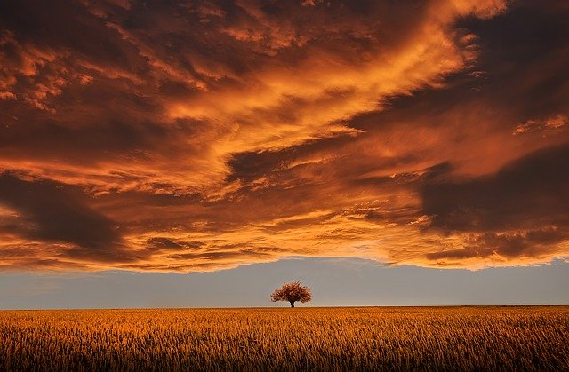 Tree, Field, Calm, Tranquil Scene, Beautiful, Clouds