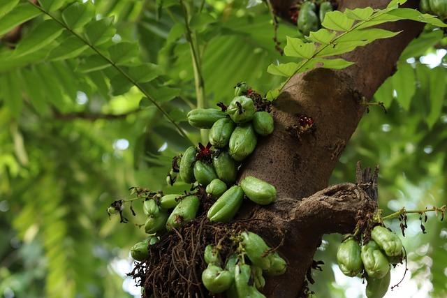 Free Photos Kerala, Bilimbi, Tree, Nature, Green, Sky