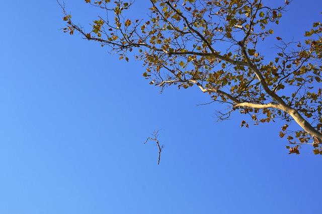 Autumn, Tree, Himmel, Branches, Blåhimmel