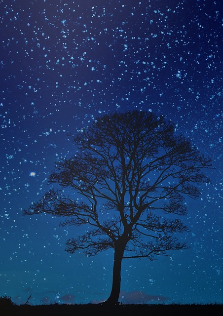 Night, Tree, Night Sky, Blue Sky, Stars, Nocturne