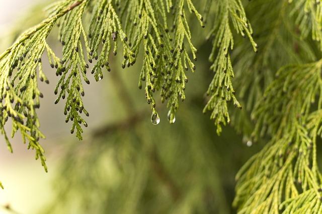 Drip, Branch, Tree, Wet, Close, Raindrop, Green, Leaf