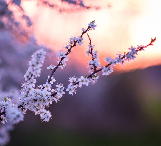 Flower, Nature, Branch, Tree, Plant, Spring, Landscape
