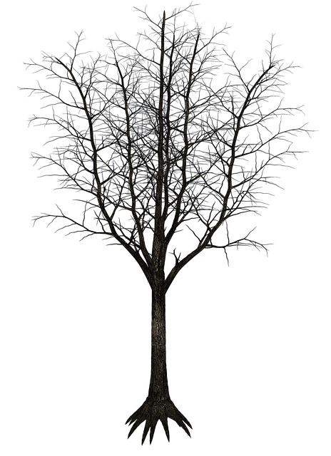 Isolated Tree, Tree, Tribe, Aesthetic, Branches
