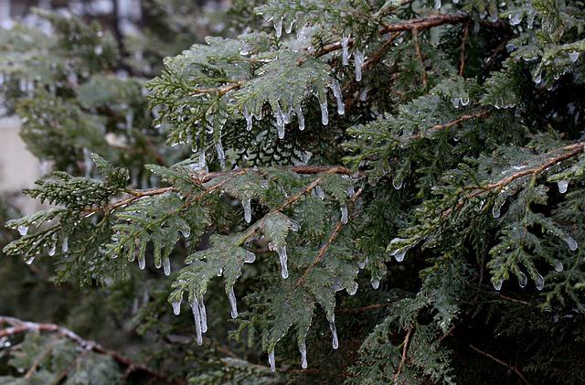 Casey, Frozen, Ice, Winter, Tree