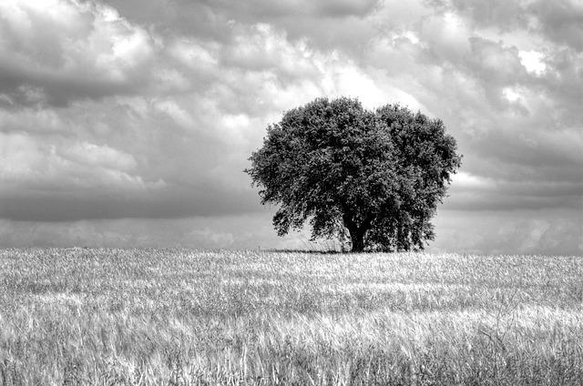 Tree, Field, Sinister, Clouds, Sky, Monochrome, Nature