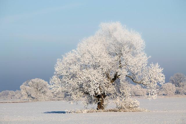 Tree, Winter Impressions, Wintry, Snow, Cold, Winter