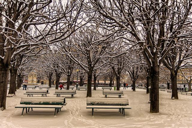 Tree, Winter, Snow, Park, Cold, Garden, Snowy Branches