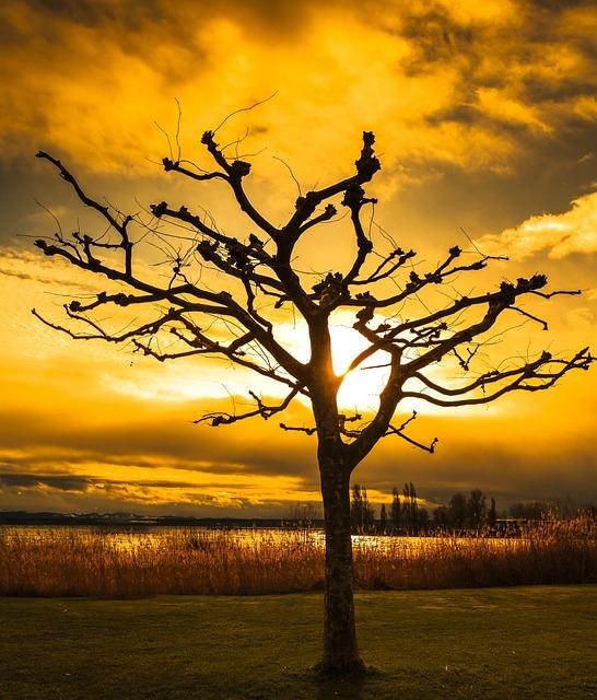 Sunset, Tree, Dawn, Silhouette, Dusk