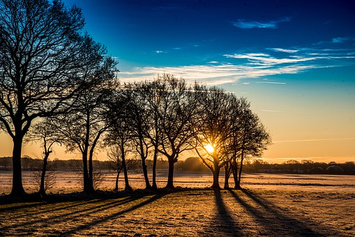 Nature, Tree, Dawn, Landscape, Sunrise, Schönwetter