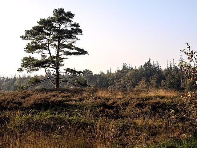 Heide, Heathland, Erika, Nature, Tree, Mood