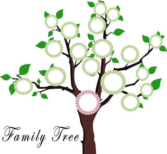 Tree, Family, Education, Frame, Dna