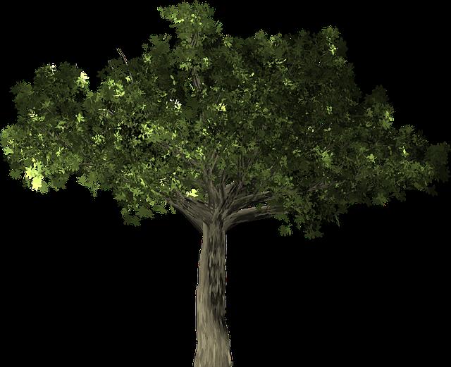 Ficus, Tree, Plant, Isolated, Ficus Microcarpa, Banyan