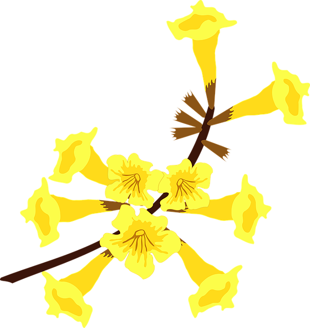 Clip Art, Flor, Flora, Flower, Nature, Plant, Tree