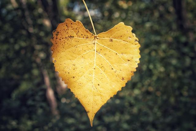 Leaf, Nature, Fall, Outdoors, Tree, Flora, Wood, Bright